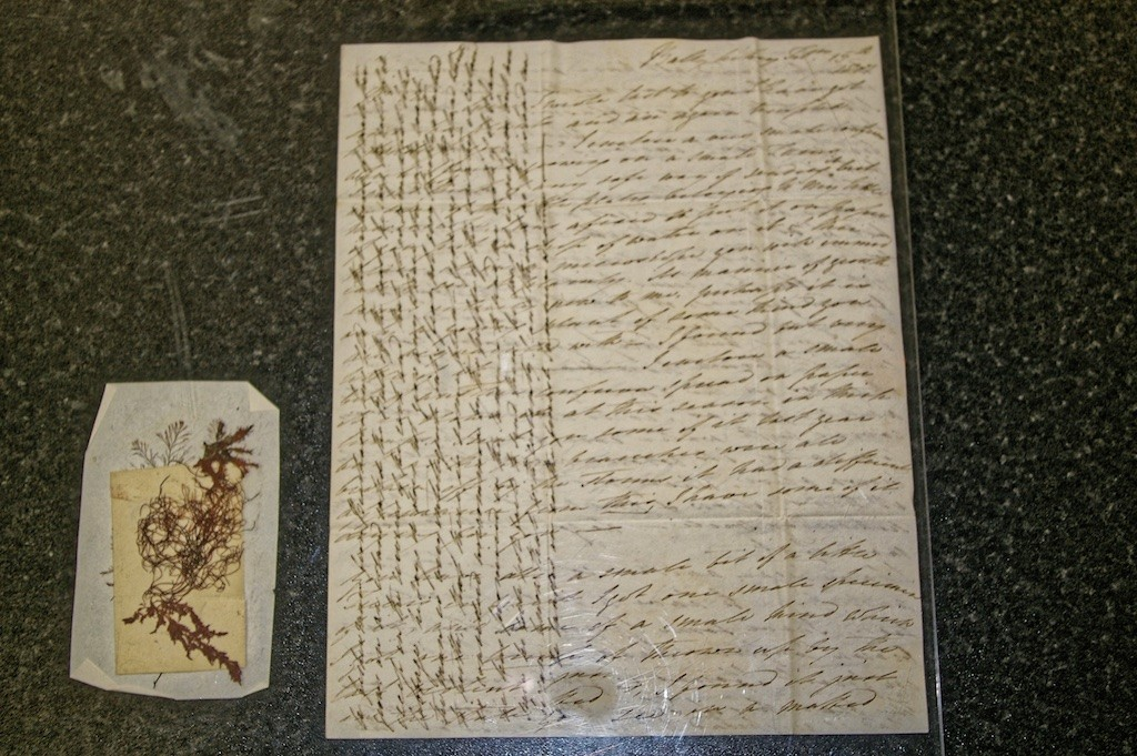 Crosshatched letter with Specimen from Ellen to James Mackay at TCD