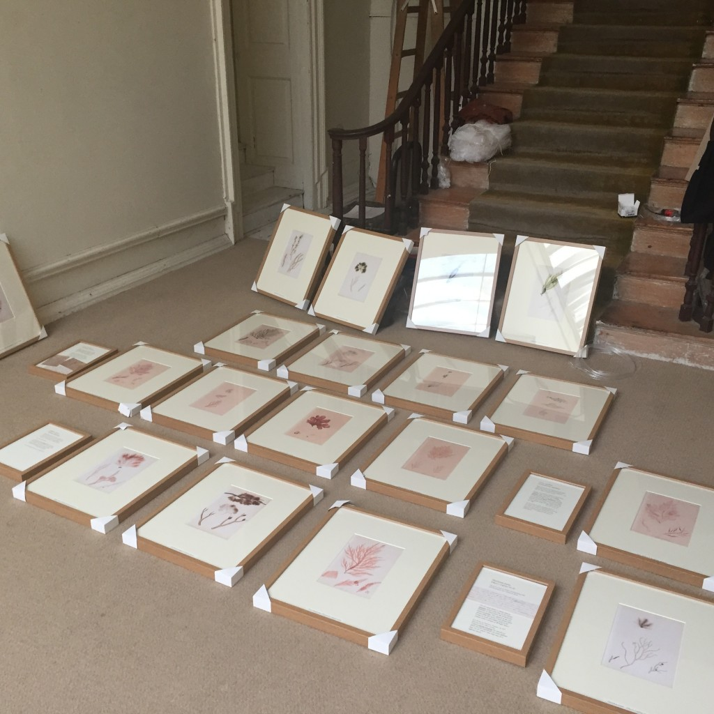 The prints grouped ready for hanging