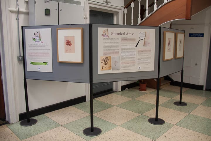 Drawings of seaweeds and information panels on the Celebrating Ellen Hutchins exhibition.