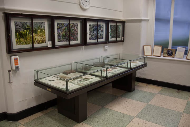 Photographs of cryptogams and plants linked to Ellen from West Cork and display of specimens, letters and drawings, part of the Celebrating Ellen Hutchins exhibition at Trinity