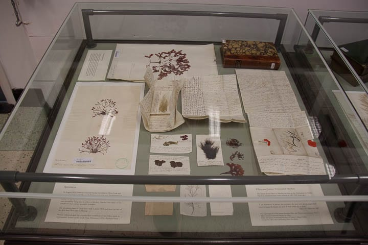 Display of Ellen's letters to James Mackay with specimens