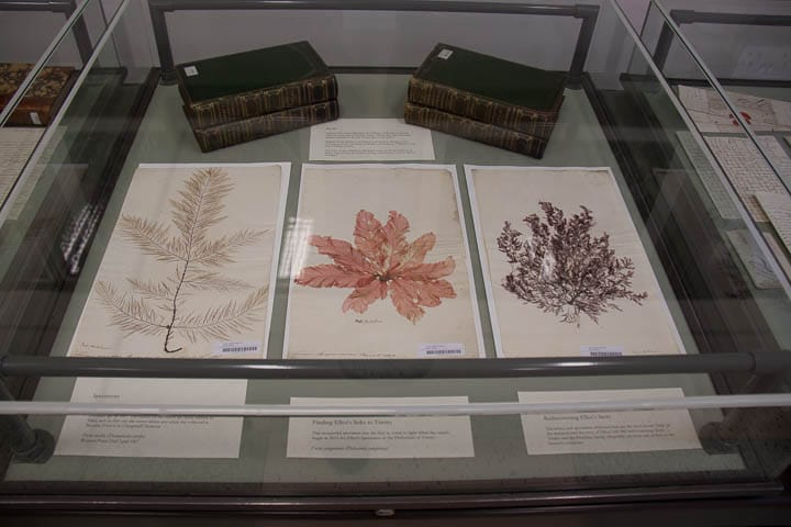 Display of seaweed specimens collected by Ellen Hutchins in Bantry Bay 1807-1809